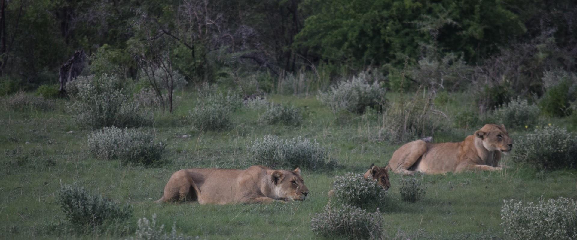 Namibia05.jpg