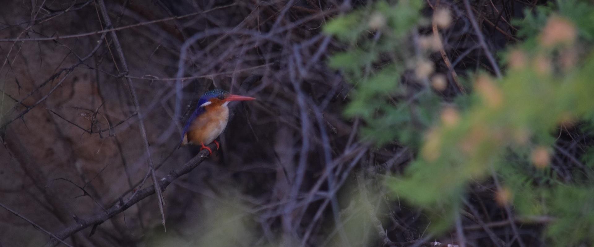 Namibia18.jpg